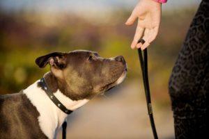 dog-on-leash - Access Veterinary Care - Minneapolis