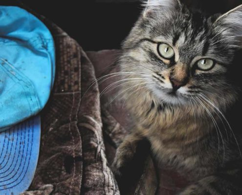 Vet care pricing - cat and purse